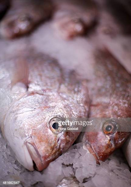 Snapper are on display at an Auckland fish market on March 31 2014 in Auckland New Zealand From April 1 2014 recreational fishermen on part of the...