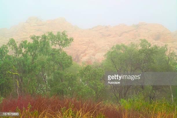 Snappy gum on lateritic sandstone escarpment of the central range Broadmere Station western Gulf of Carpentaria Northern Territory Australia