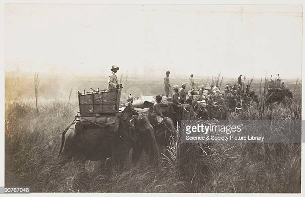 A snapshot photograph of a group of tiger hunters in India taken by an unknown photographer in about 1897 Hunting tigers for sport was popular with...