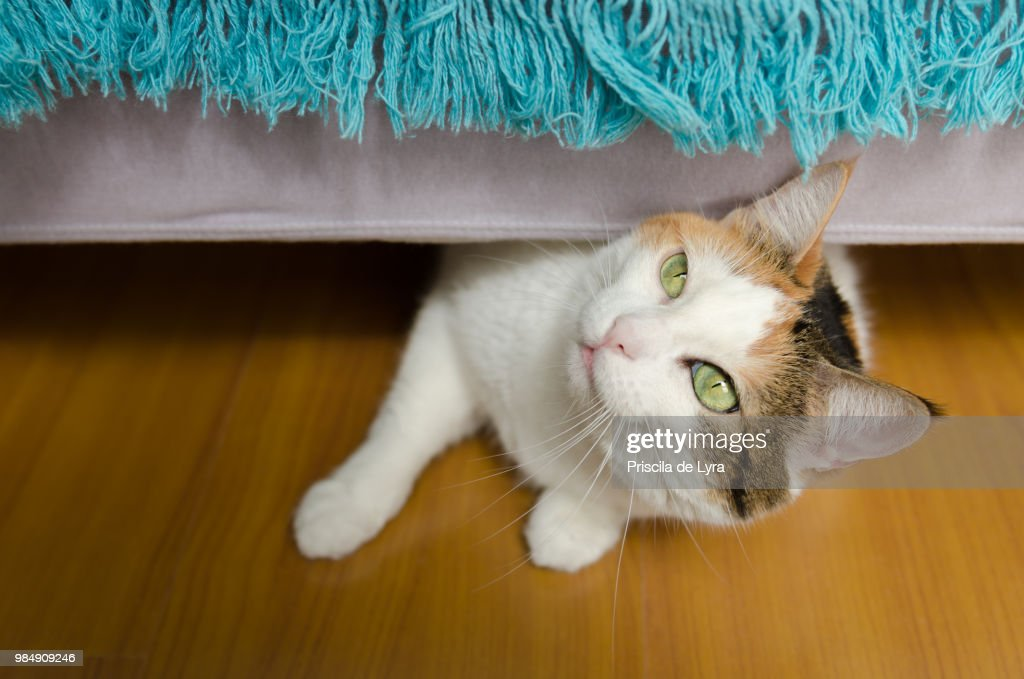 Sneaking out : Stock Photo