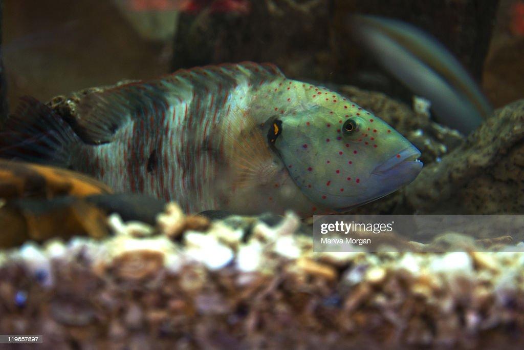 Sneaky fish : Stock Photo