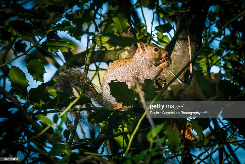Sneaky squirrel : Stock Photo