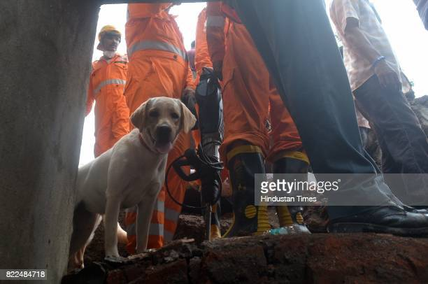 Sniffer dog at the sight where the building Sai Darshan Apartment collapsed at Ghatkopar East on July 25 2017 in Mumbai India 12 people have died and...