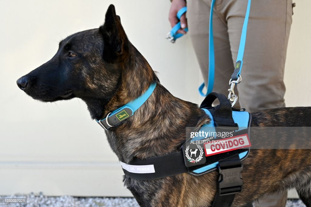 ITALY-HEALTH-VIRUS-DOGS : News Photo