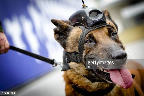 Sniffer dogs and their supervisors practice at the World forum, on March 18, 2014 in the Hague, one week ahead of the Nuclear security summit an...