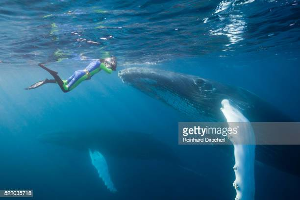 Snorkeler and Humpback Whale, Dominican Republic
