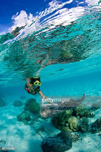 Snorkeler and Tahitian Stingrays (Himantura fai)