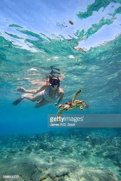 Snorkeler & Green Sea Turtle