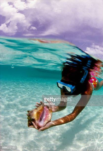 snorkeler holding conch in ocean - conch shell stock pictures, royalty-free photos & images