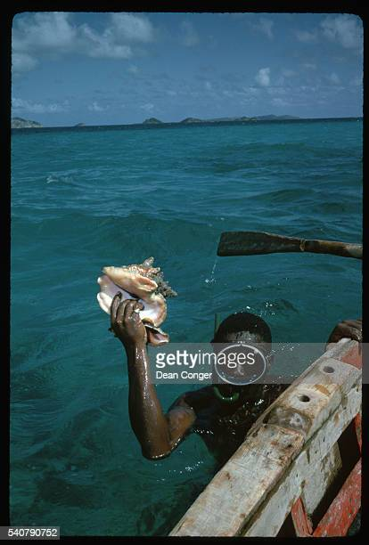 Snorkeler Holding Conch Shell