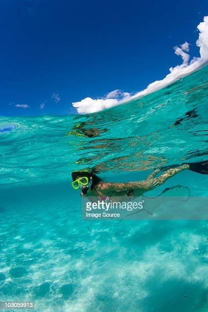 snorkeler in shallow water. - stingray stock photos and pictures