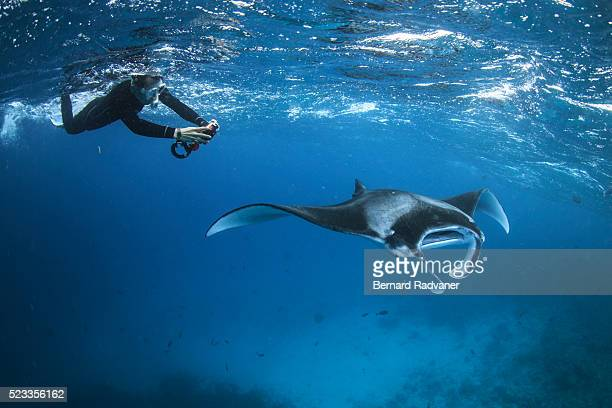 snorkeler photographing a manta ray