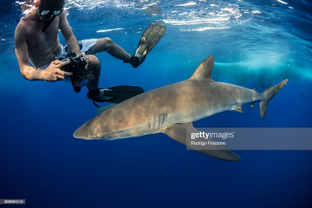 Snorkeler photographing a silky shark (Carcharhinus falciformis), Roca Partida, Colima, Mexico : Stock Photo