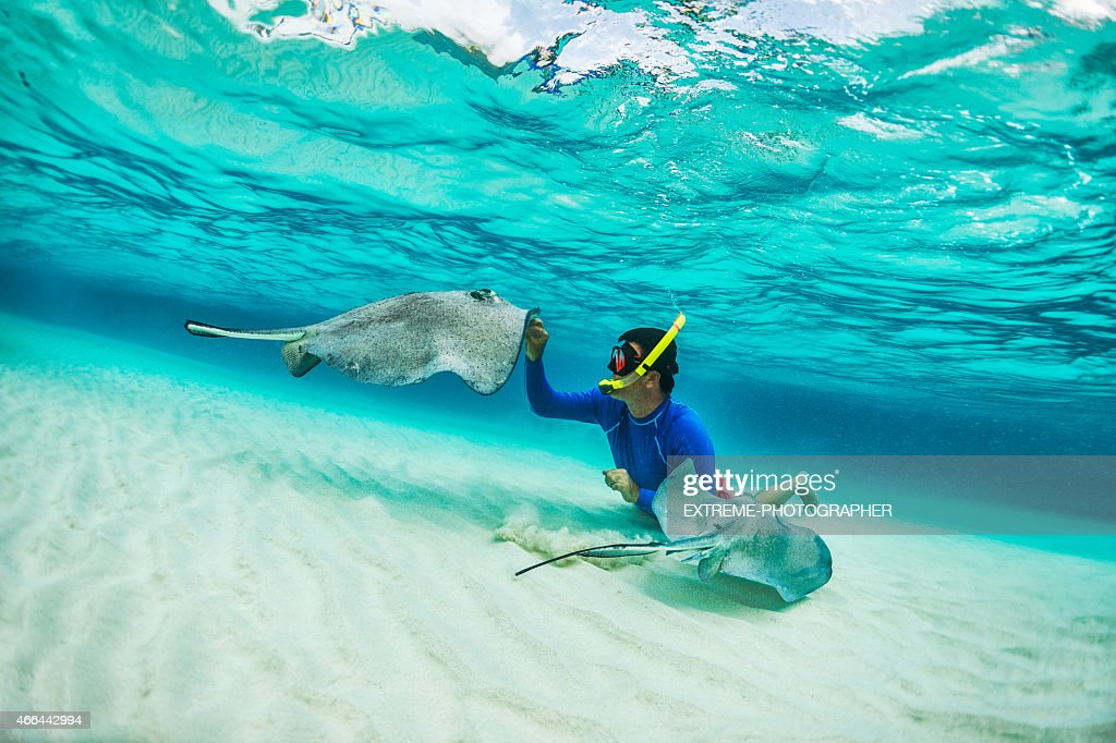 Snorkeler playing with stingray fishes : Stock Photo