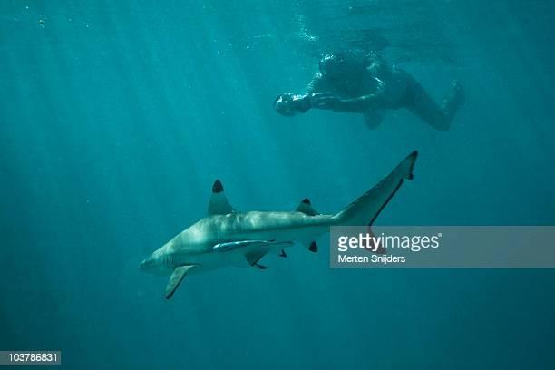 snorkeler taking photograph of blacktip shark at les failles. - merten snijders stockfoto's en -beelden