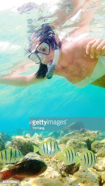 arrecife snorkeler con tropical fishes in hawaii coast - exotismo fotografías e imágenes de stock