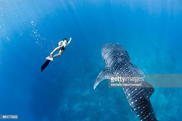 Snorkeler with Whale Shark, Maldives