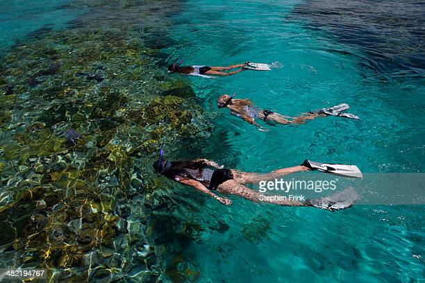 snorkelers above a coral reef. - ナッソー ストックフォトと画像