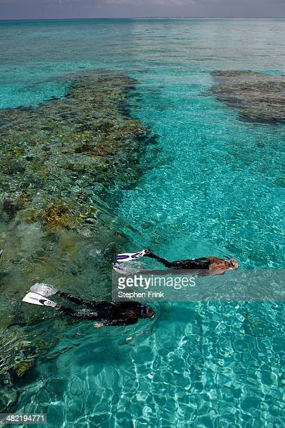 snorkelers above a coral reef. - nassau stock pictures, royalty-free photos & images