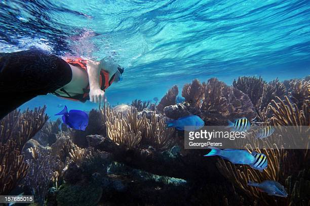 snorkeling and caribbean reef with fish - mayan riviera stock photos and pictures