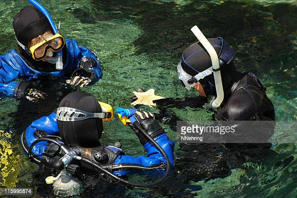 snorkeling and scuba diving students examine bat star