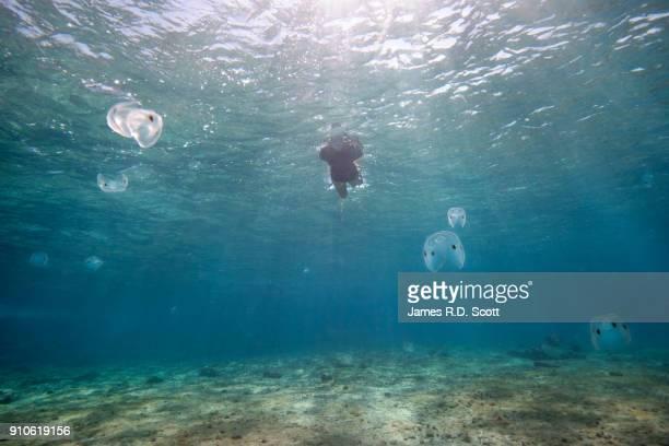 Snorkeling in Cozumel amongst Comb Jellies