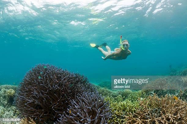 Snorkeling in Palau Micronesia Palau