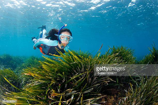 Snorkeling in seagrass
