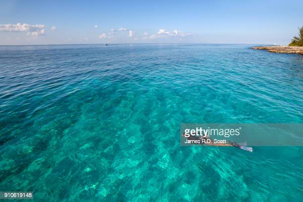 snorkeling off the island of cozumel - quintana roo stock photos and pictures
