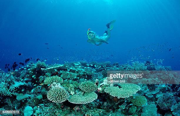 Snorkeling over Coral Reef Maldives Indian Ocean Ari Atoll