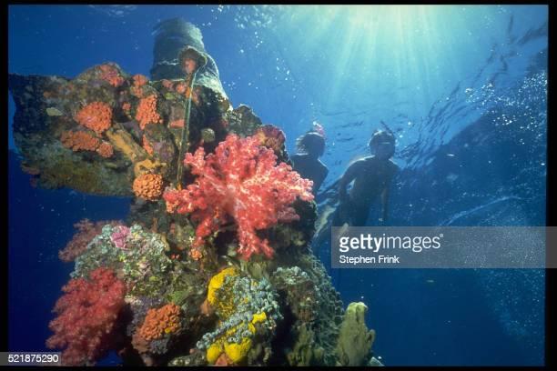 snorkeling over shipwreck - lagon chuuk photos et images de collection