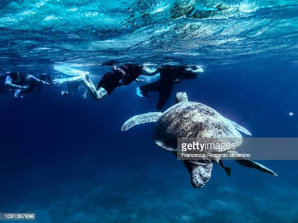 Snorkeling with a Marine Turtle in Marsa Mubarak, Egypt