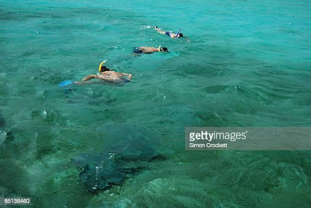 snorkelling off caye caulker, belize - simon crockett stock pictures, royalty-free photos & images
