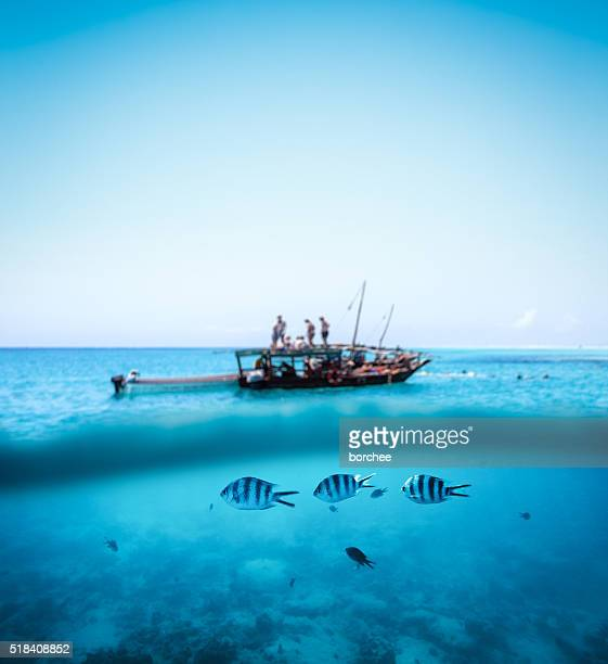 snorkling on zanzibar - zanzibar island stock photos and pictures
