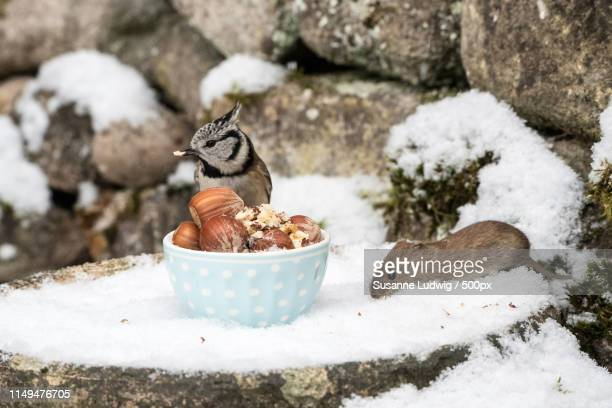 snow alliance - susanne ludwig stock pictures, royalty-free photos & images
