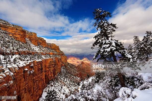 Snow along Bright Angel Trail of Grand Canyon and leaning evergreen tree