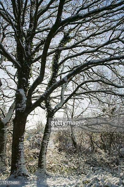 snow along the road past yarner wood and trendlebeare common, nr manaton, dartmoor national park, devon, great britain. - newpremiumuk stock pictures, royalty-free photos & images