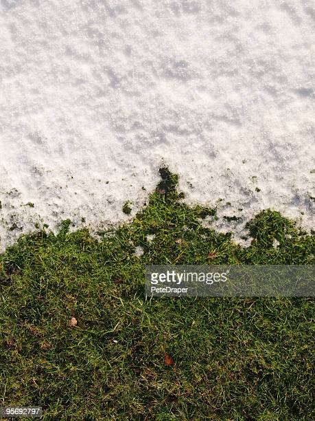 Snow and Grass Gradient