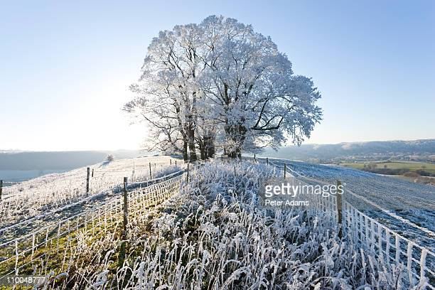 snow and hoar frost covered tree, england - peter adams stock pictures, royalty-free photos & images