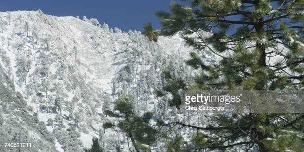 Snow and trees in mountain landscape