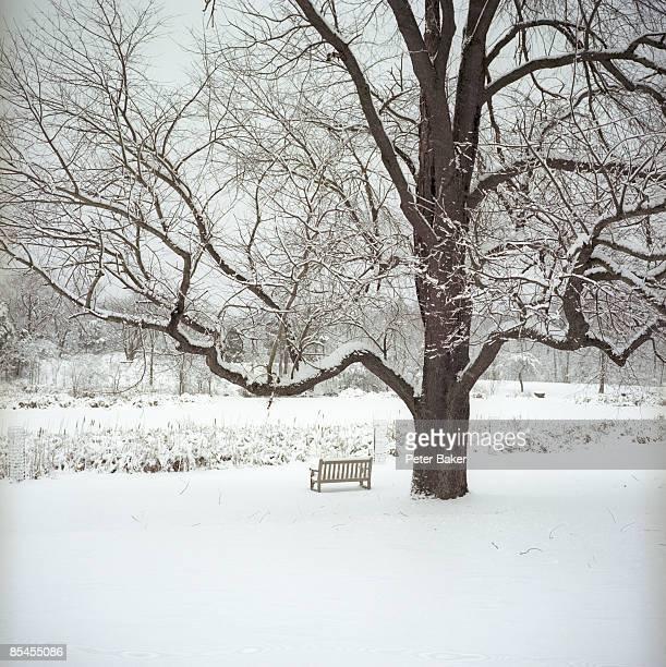 Snow at the Botanical Gardens