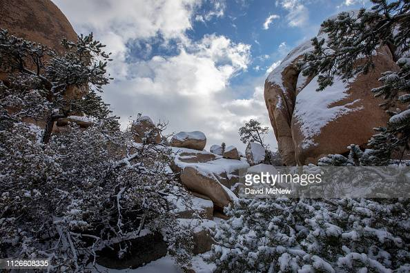 Snow Blankets Joshua Tree National Park On February 21 2019