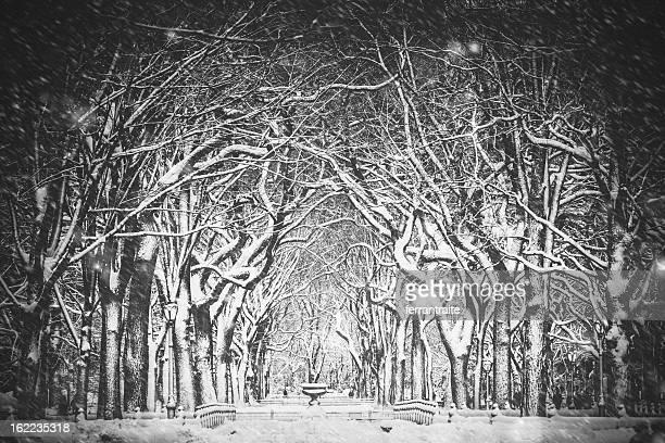 Neve Nevão Nova Iorque