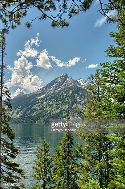 Snow Capped Mountain Surrounded by Pine Trees
