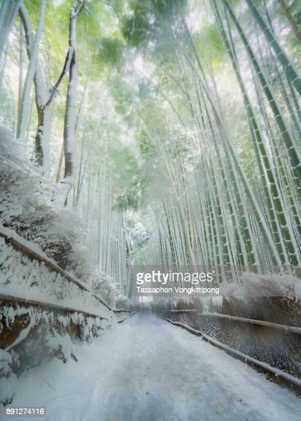 snow capped walking path way under bamboo grove forest at Arashiyama Kyoto, Japan