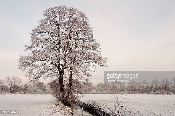 snow coated tree - bernd schunack stock-fotos und bilder