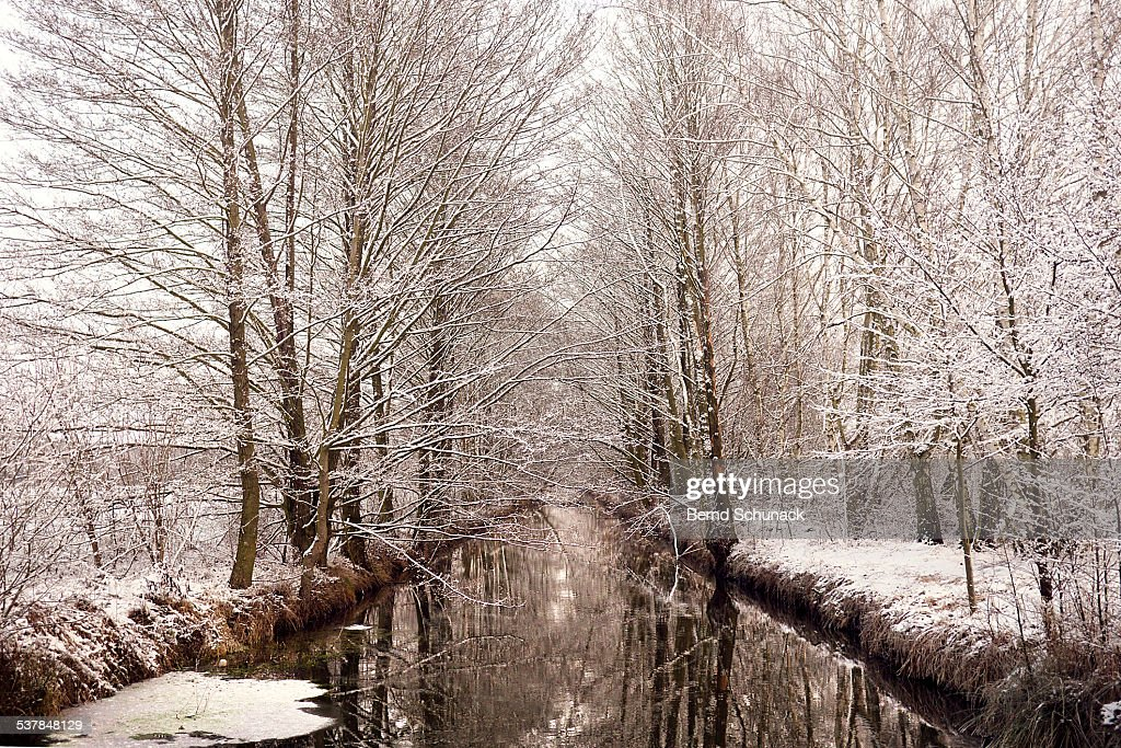 Snow Coated Trees In Spreewald : Stock-Foto
