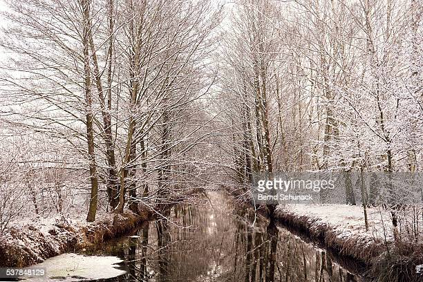 snow coated trees in spreewald - bernd schunack stock-fotos und bilder