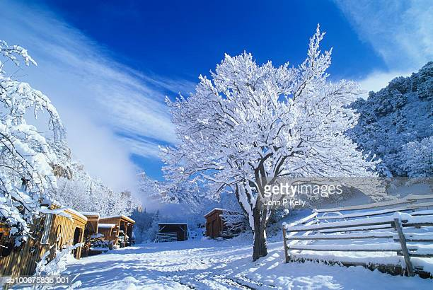 snow covered apricot tree, fence and ranch buildings - コロラド州 ニューキャッスル ストックフォトと画像