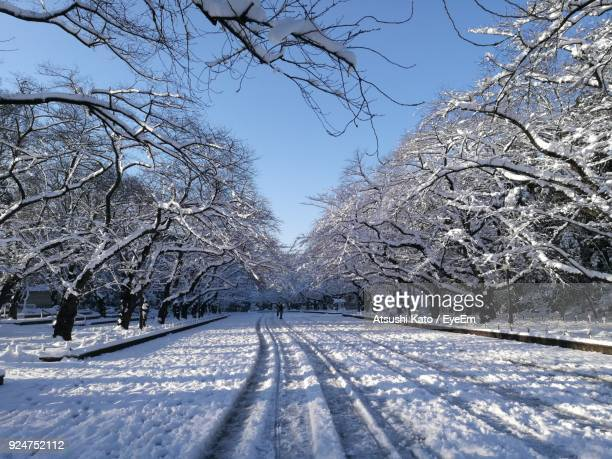 Snow Covered Bare Trees Against Clear Sky